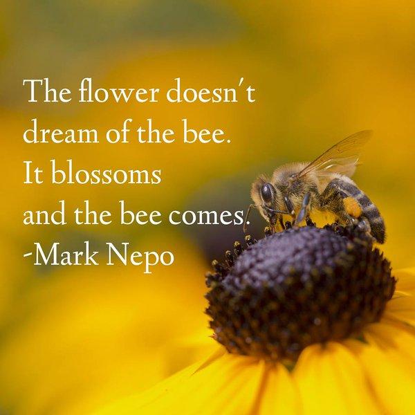 Bee Flower Podcast Human Bells