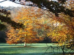 withdean autumn